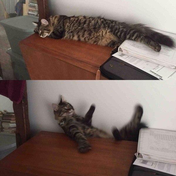 KPBZl5MG5AI - Вообще-то я котов не боюсь, но тут вот какая история произошла…