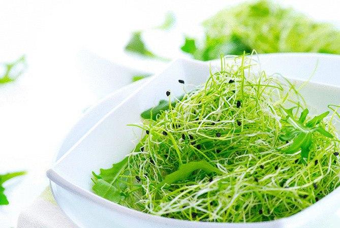 1uSTPujzPUo - Биогенная еда