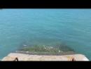 черное море крым 2016 отдых