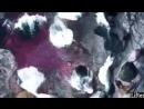 Чудеса Аллаха - YouTube.MP4