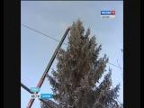 В Турках пенсионер подарил поселку тридцатилетнюю ель