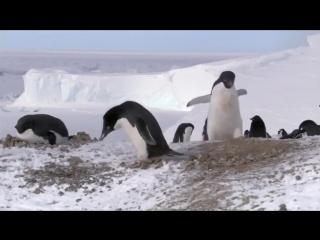 Хитрый пингвин