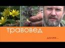 Травовед Багульник Рассказывает Моряков Сергей Викторович