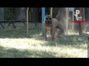 Собака жжет резину (полный привод) [Рыбачёв и Пёс неизданное]