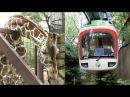 キリンやカバも登場!上野動物園モノレール Part2【レイルリポート 06】Giraffe and H