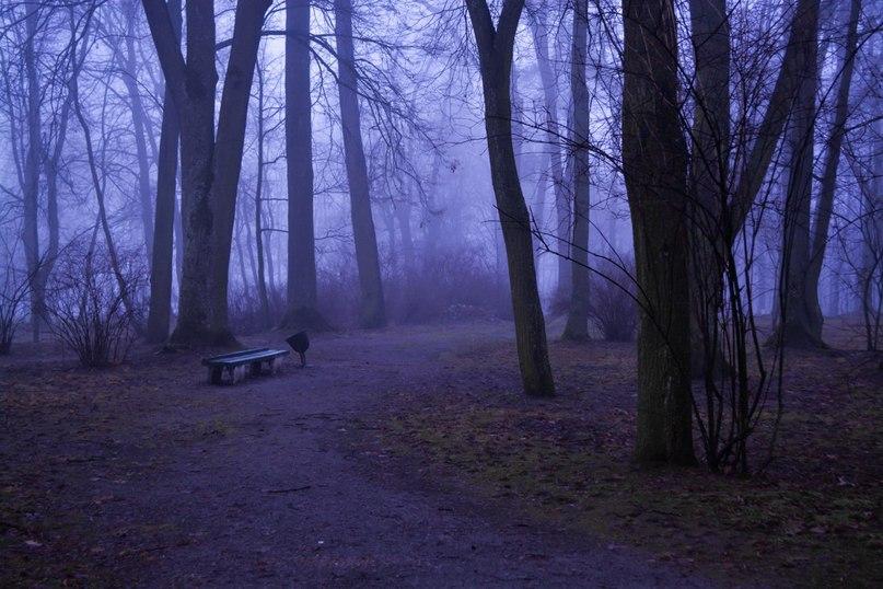 Мистический Лошицкий парк
