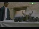 Бо Ба Бу  Bo Ba Bu (Али Хамраев, 1998, Узбекистан, Франция, Италия, драма, комедия)