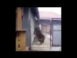 Приколы 2016 лучшие Супер смешные видео про людей животных пьяных приколы 2016 лучшие-Обрезка д 01