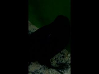 ворон лапушка
