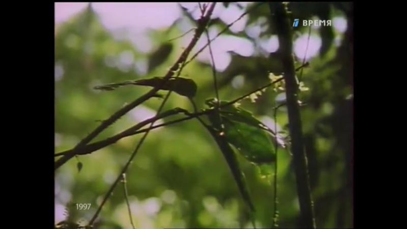 Staroetv.su / В мире животных (ОРТ, 1997) Одна, но пламенная страсть...