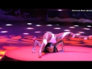 Black Beauty Contortion