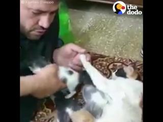 Сириец спасает кошек в осаждённом Алеппо