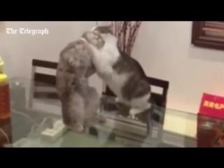 John Cena WWE Cat Джон Сина кот wwe