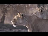 BBC. Великие природные явления. 3 Серия: Великое Переселение / The Great Migration (2009)