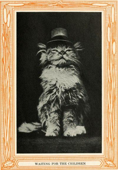 Коты в одежде, 1911 год