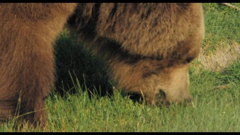 Россия царство тигров медведей и вулканов Документальный фильм 2011 год