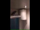 Залетевший в квартиру попугай шокировал хозяев