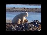 Polar bear can't stop stroking dog