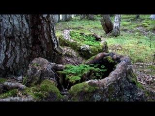 Bosc del Gerdar - Catalunya