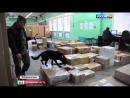 ОРУЖИЕ ПОЧТОЙ. Сотрудники ФСБ обнаружили оружие и гранаты