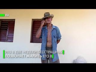 Укус скорпиона: на Кубе нашли нетривиальное лекарство от боли