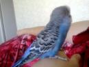 попугай разговорился