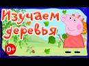 Свинка Пеппа Изучаем виды деревьев Развивающие мультики для детей от 0 до 4х лет