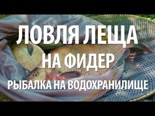 фидерная рыбалка на толстолобика видео