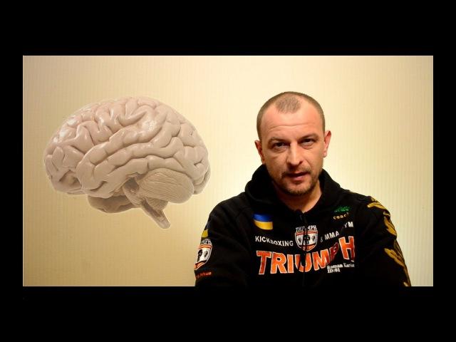Работа мозга перед боем. Бледность лица. Дефекация. Мозг - союзник или враг спорт ...