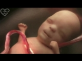 Life in the womb (9 months in 4 minutes) HD - Presented to You from PSNX [HD, 1280x720p]