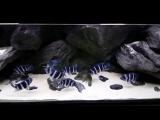 3D объемный фон для аквариума - 3