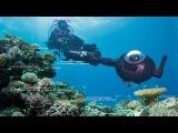 Следить за Барьерным рифом помогает технология распознавания лица (новости)