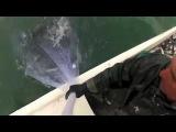 Кастинговая сеть 500 фунтов рыбы в два заброса!