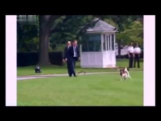 «Введение в собаковедение» (09 серия) (Научно-популярный, животные, 2009)