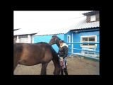 Мои лошадки)))