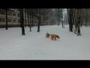 Снежное утро. Все счастливы! Собаки особенно!