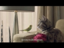 Freeview TV Ad - Cat & Budgie