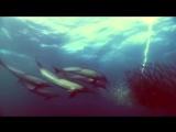 Фредерик Шопен - Ноктюрн №20 (Trance Remix) - MX77