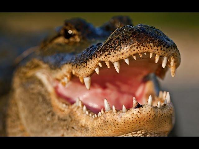 Самый большой крокодил в мире/Супер крокодил/Доисторические хищники/Гиганты ми ...