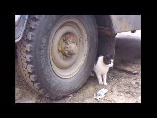 Мышь прячется от кота в колесе