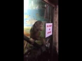 Macaco batedor de punheta kkk