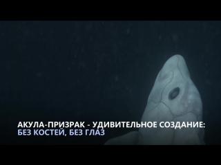 Акула - призрак