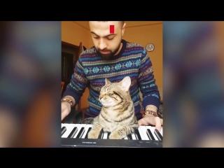 Кот пианист из Турции