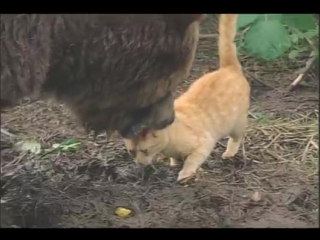 Кот и мишка