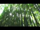 Япония тур 2 Киото Арасияма