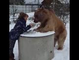 Медведь который просто зашёл покушать.