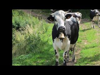 Le Markstein, au coeur des Hautes Vosges d'Alsace