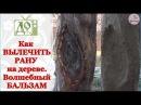 Как вылечить РАНУ на плодовом дереве Рецепт целебного бальзама для дерева