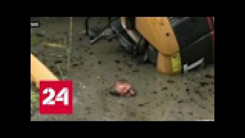 Водителя экскаватора спасла от смерти поза кобры