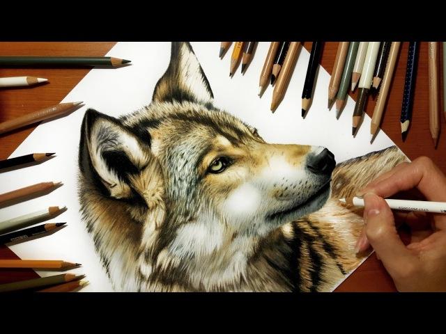 Speed Drawing of a Wolf | Jasmina Susak